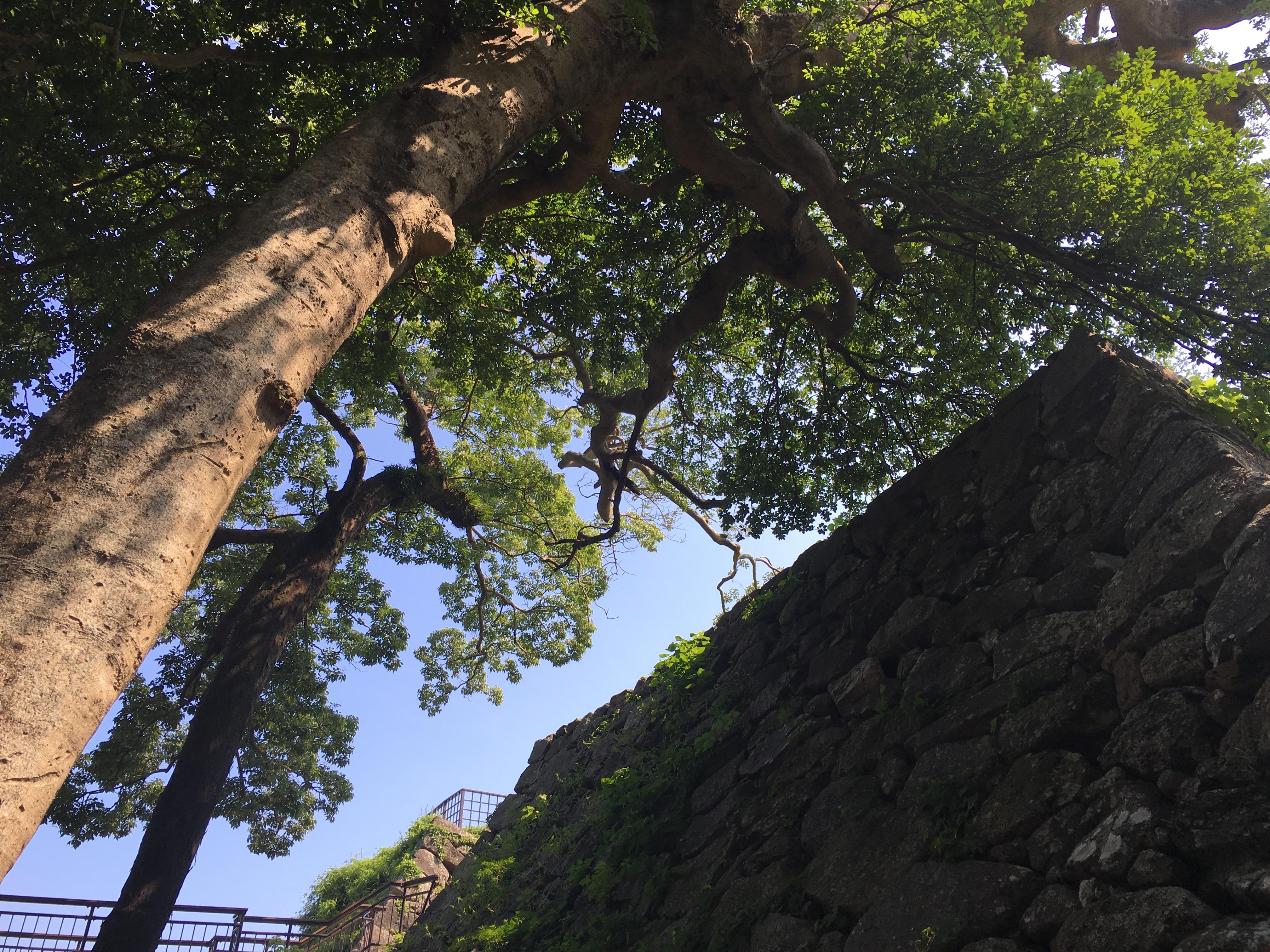 Stone_Wall_Fukuoka_Castle_Ruins